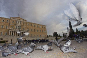 Pigeons in front of the Greek Parliament at Syntagma square, Athens, Greece.